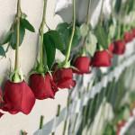 'Una rosa para Guía de Isora' de Fernando Álamo.