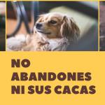 No abandonesyour help